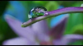 Naturaleza a Cámara Lenta