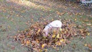Willow el cerdito y su montaña de hojas
