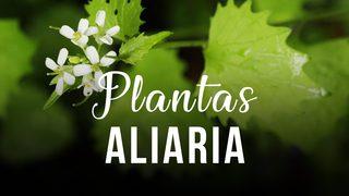 Aliaria