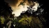 Canción sobre el despertar, Aloha Ke Akua (Nahko Bear)