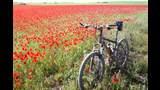 Aprende a cargar el móvil con tu bicicleta