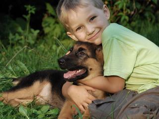Importancia de los animales en la terapia