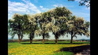 Los Árboles de la Fruta de la Tentación