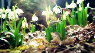 Flores a cámara rápida