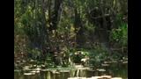 The Wild Island Of Cuba