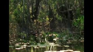 Cuba - Wild Island of the Caribbean