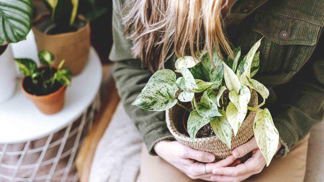 Plantas en casa: descubre todos los beneficios que aportan a tu hogar