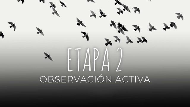 12 - Observación activa