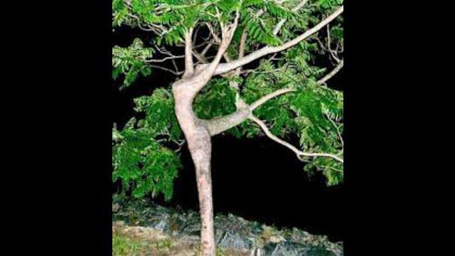Impresionantes rarezas de la naturaleza