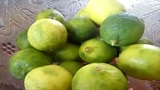 Cómo germinar las semillas de limón
