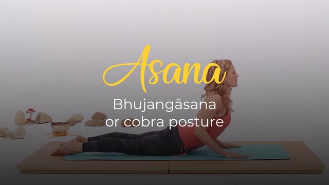 Bhujangâsana or cobra posture