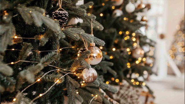 Descubre el origen del Arbol de navidad en nuestra sociedad